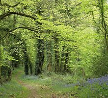 Priory Wood in spring by Jane Corey