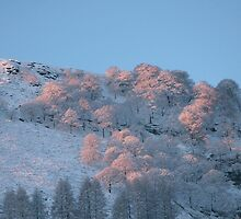 Winter sunrise by Jane Corey
