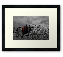 female redback spider Framed Print