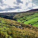 Swaledale, The Dales by Sandra Cockayne