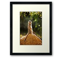 What are you looking at.......! Framed Print