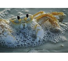 Ghost Crab I Photographic Print