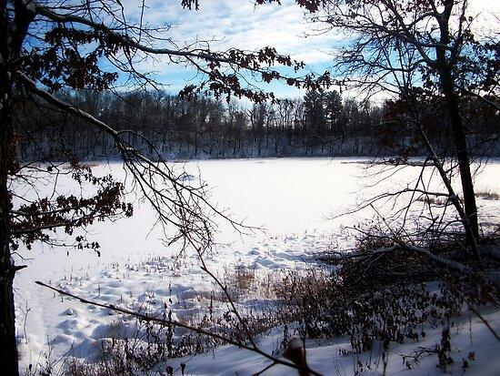 Winter Scene by Rachel Meyer