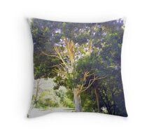 Cape Holly (Ilex mitis) ~ Kaapse Withoutboom Throw Pillow