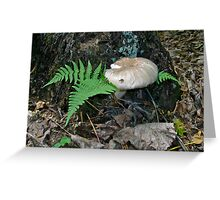 Mushroom and Fern Greeting Card
