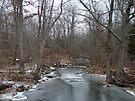 Deep Creek - Green Lane Reservoir, PA by MotherNature