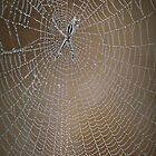 The Webmaster by Barb Leopold