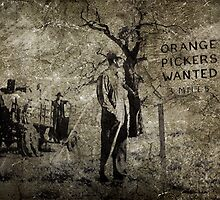 Orange Pickers Wanted by garts