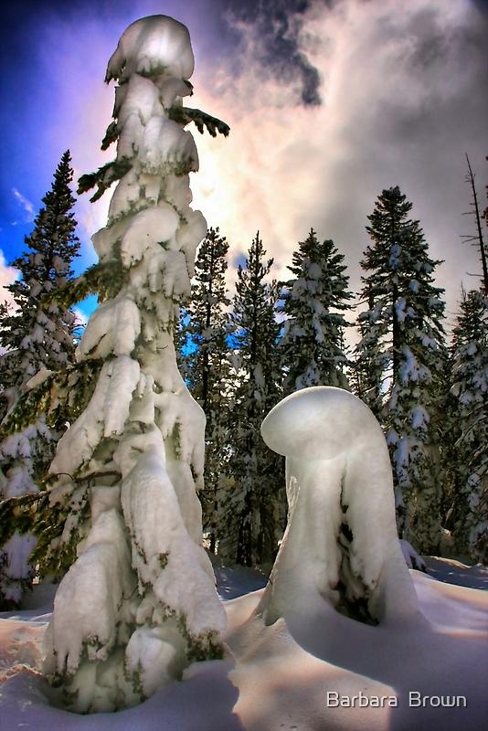 Winter Wonder by Barbara  Brown