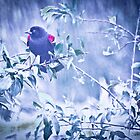 RedWingedBlack Bird by Theodore Black