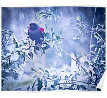 RedWingedBlack Bird Poster