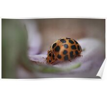 Ladybird on Petal Poster