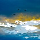The birds fly home by Ali Brown