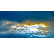 The birds fly home Photographic Print