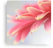 Pink droplet Canvas Print