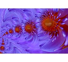 lotus infinite love Photographic Print