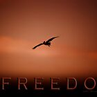 Freedom 2 © Vicki Ferrari Photography by Vicki Ferrari