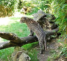 Fishing cat 2 by 29Breizh33