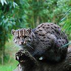 Fishing cat 1 by 29Breizh33