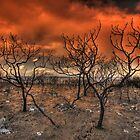 After The Fires by Chris Paddick