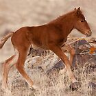 February Colt by Kent Keller