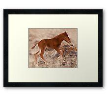 February Colt Framed Print