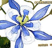 Aquilegia caerulea (Columbine) by Carol Kroll