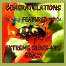 Banner entry for Extreme Close-ups Group by Pieta Pieterse