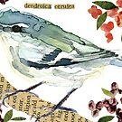 Dendroica cerulea [Cerulean Warbler - female] by Carol Kroll