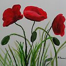 The poppy flowers by Monika Howarth