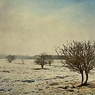 Small trees by AlanPee