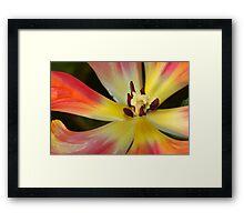 Rainbow Petals Framed Print
