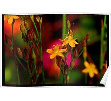 mornings flower Poster
