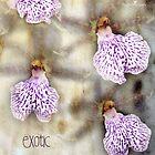 Exotic by Olga