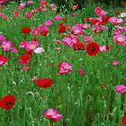 Poppies in a Field, Red, Pink, White by DaveMoffatt