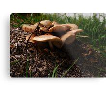 Mushroom Motel  Metal Print