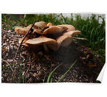 Mushroom Motel  Poster