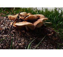 Mushroom Motel  Photographic Print