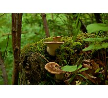 Scottish Shelf Mushrooms Photographic Print