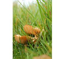 Mushrooms on a Hillside Photographic Print