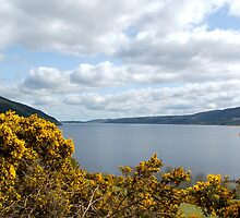 Golden Flowers of Loch Ness by ScottishVet