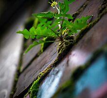 Urban Garden by Luisa Cavallaro