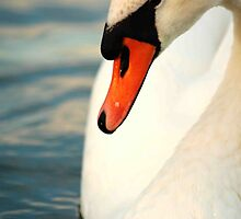 Swan  by Catherine Chapman