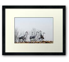 Sandhill Cranes 3 Framed Print