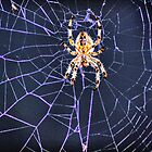 Orb web Spider by larry flewers