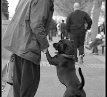 Man and Dog by Catherine Chapman