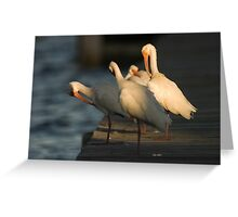 Ibis at sunset Greeting Card
