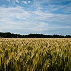Ready to harvest by NicoleBPhotos
