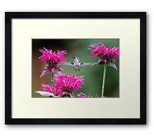 Hummingbird Superhero! Framed Print