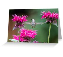 Hummingbird Superhero! Greeting Card